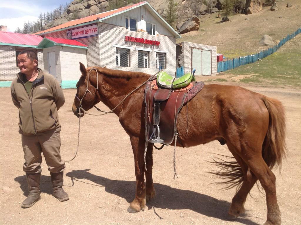 Tällä hevosella pääsee ratsastamaan Kilpikonnavuorella.